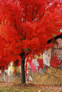 The Beltline in Fall by Linda Coatsworth